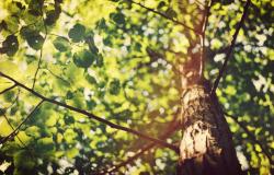 Na semana mais quente do ano, o Dia da Árvore ganha mais importância com ações ambientais
