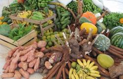 Duas mil famílias vivem da agricultura familiar em Cuiabá