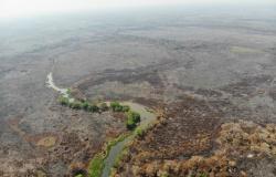 Ministro do Meio Ambiente visita áreas afetadas por queimadas do Pantanal de MT