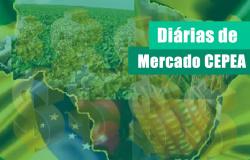 ALGODÃO/CEPEA: Com indústria retraída, oferta supera demanda e preço cai