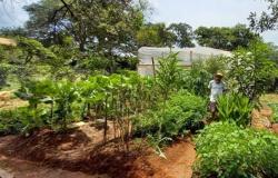 Produtores de Brumadinho aumentam a produção e comercialização de alimentos