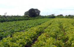 Ministério paga Garantia-Safra a 25 mil agricultores familiares