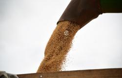 Mercado internacional e taxa de câmbio motivam alta de 96,6% no preço da soja em MS