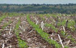 ?Revolução verde? na agricultura é tema de capacitação gratuita do Senar/MS