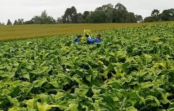 CNA defende a criação de Cadecs para a fumicultura