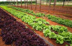 CNA debate rastreabilidade de frutas e hortaliças no Tocantins