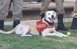 MT é referência em trabalhos de busca, resgate e salvamento com cães do Corpo de Bombeiros Militar