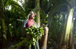 Muitas conquistas no campo são alcançadas com o auxílio da Contribuição Sindical Rural