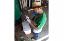 Senar-MT capacita mão de obra para atuação no manejo sanitário de rebanhos no estado