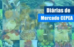 MILHO/CEPEA: Indicador supera os R$ 100/sc