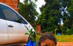 Plantio de árvores frutíferas promove recomposição de área de preservação do bairro Santa Terezinha