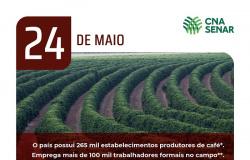 Dia Nacional do Café - Bebida é a mais popular entre os brasileiros
