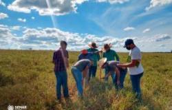 Conhecimento a serviço da melhoria alimentar do gado de corte