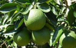 Mel, frutas e pescados brasileiros conquistam mercados internacionais