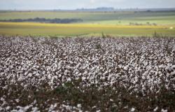 CNA debate equilíbrio nos contratos rurais para o sistema produtivo