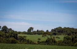 Cuidados que devem ser tomados ao adquirir uma propriedade rural