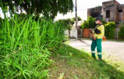 Limpurb fecha a semana com mutirões no Dr. Fábio I e na Rodovia Palmiro Paes de Barros
