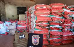 Policiais civis recuperam 185 sacas de sementes de capim e prendem receptador em Paranatinga