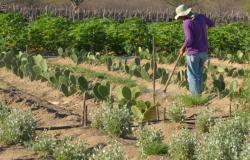 BNDES e fundo internacional lançam projeto de R$ 1 bi para semiárido