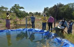 Deputado Botelho cobra investimentos à agricultura familiar em MT