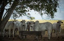 Campo Futuro apura custos da pecuária de corte