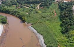 Reflorestamento em Brumadinho usa técnicas inéditas, mas só atingiu 1%