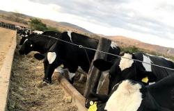 Treinamento aposta no uso da palma como suporte forrageiro dos rebanhos leiteiros no semiárido