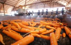 CNA discute autocontrole da defesa sanitária vegetal
