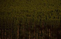 BNDES apoia plantio de 7,4 milhões de árvores em Minas Gerais
