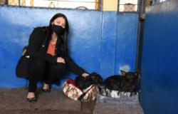 Primeira-dama viabiliza compra de caminhas e cobertores para resgatados da Diretoria de Bem-estar Animal