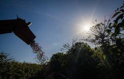 Comitê Técnico do CDPC aprova R$ 1,3 bilhão para ajudar cafeicultores afetados pelas geadas