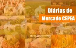 FRANGO/CEPEA: Competitividade da carne de frango registra 2ª queda mensal seguida