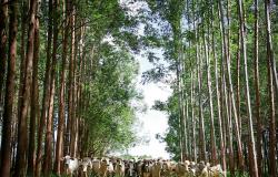 CNA defende o agro como solução para enfrentar o aquecimento global