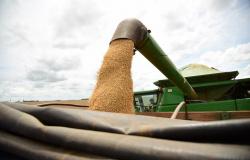 Mato Grosso do Sul: VBP da Agropecuária tem crescimento estimado em 18,29% em 2021