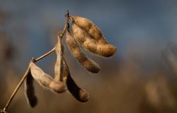 CNA debate novo padrão chinês para classificação da soja
