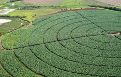 Conab estima safra de grãos 2021/2022 em 289,6 milhões de toneladas