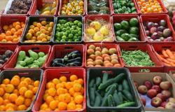 Comissão Técnica de Hortifruticultura debate gargalos do setor