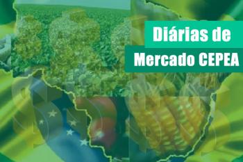 TRIGO/CEPEA: Com proximidade da colheita, valores se enfraquecem