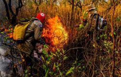 Deputado promove live com especialistas para tratar sobre queimadas em MT