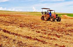 Paraná pode ter plantas de soja emergidas a partir de 13 de setembro