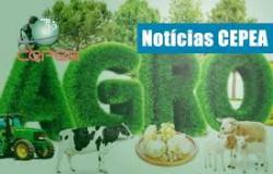 Está disponível no site do Cepea o relatório de Custos de Produção de Grãos