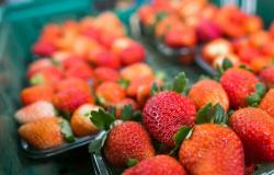 CNA apresenta oportunidades de exportações de alimentos para a Ucrânia