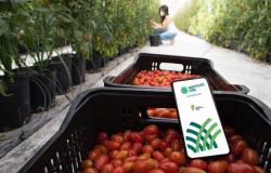 Live debate rastreabilidade e certificação de frutas e hortaliças