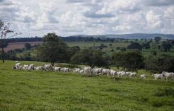 Senar compartilha experiência para a conservação do Cerrado
