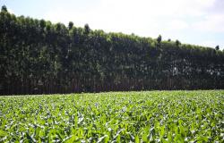 CNA discute criação de mercado de redução de emissões no Brasil
