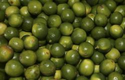 Governo vai investir R$ 34 milhões em fruticultura no DF e Entorno