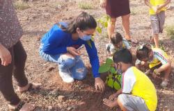 Alunos plantam mudas na escola em comemoração ao Dia da Árvore
