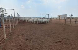 Polícia Civil recupera 105 cabeças de gado subtraídas de fazenda em Itanhangá