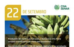 Dia da Banana - Fruta é cultivada em todos os estados