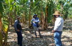 Produtores de banana recebem Assistência Técnica e Gerencial do Senar/PE